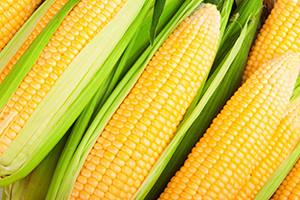 file.kukurydza warzywa kolby 300x200 file.kukurydza warzywa kolby